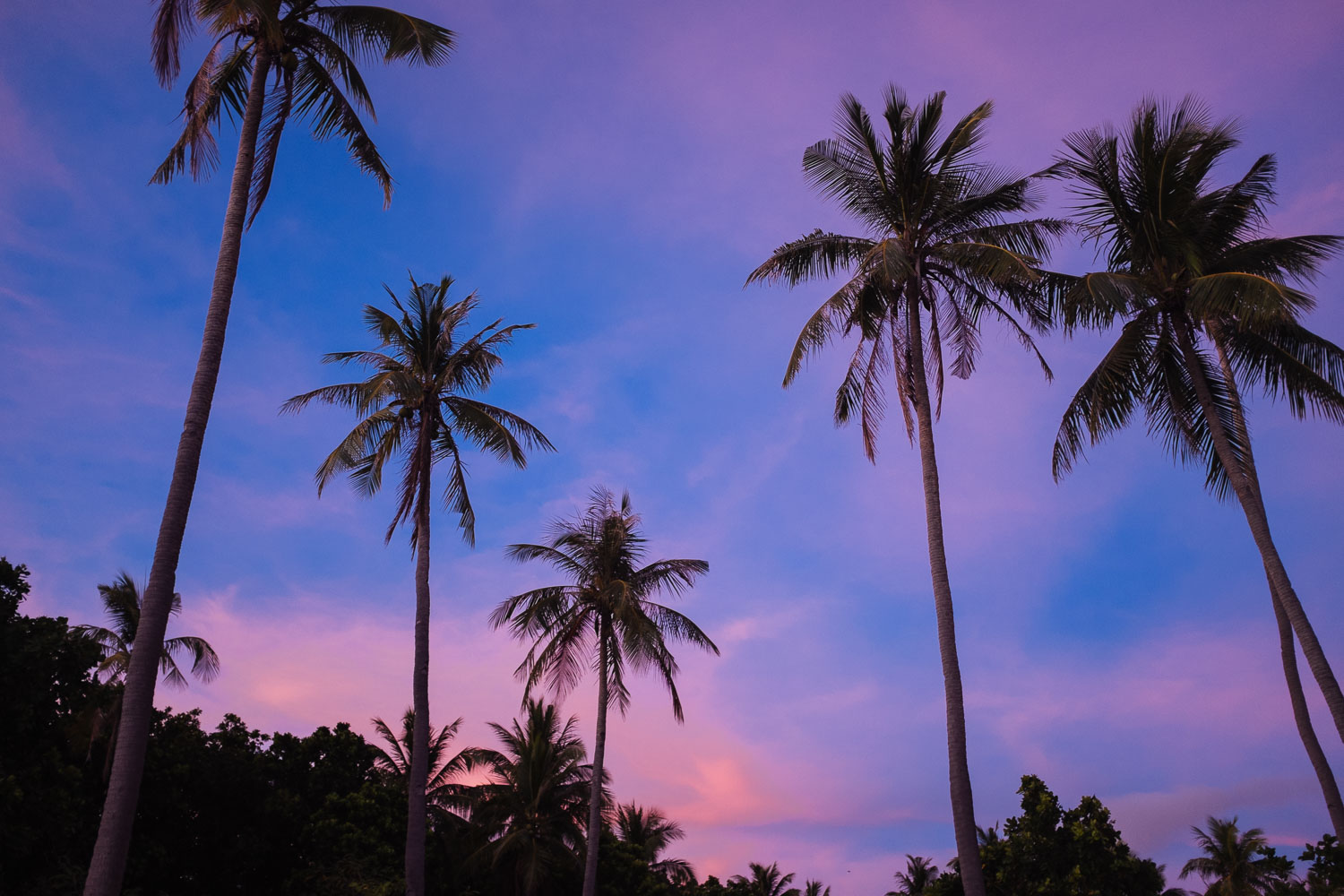 I don't think I'd ever seen pastel sunsets before.